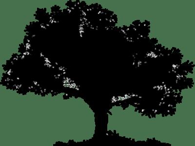 ARVE_Baum_mPfad groß Kopie